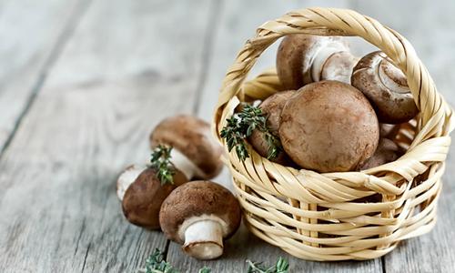 грибы-при-грудном-вскармливании