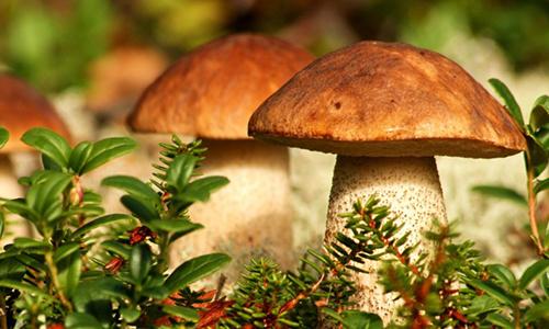 можно-ли-грибы-кормящим