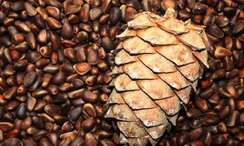кедровые орехи при грудном вскармливании
