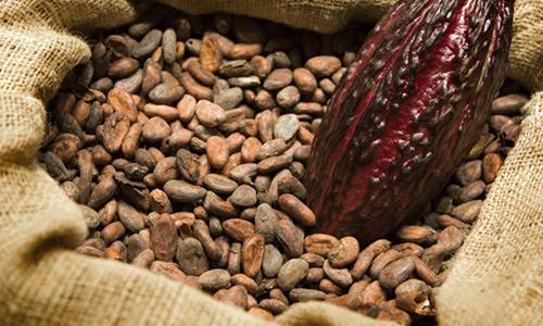 какао напиток кормящим