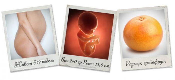 19 недель беременности