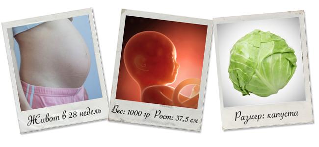 как выглядит малыш на 28 неделе