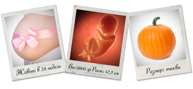 ребенок на 36 недели беременности