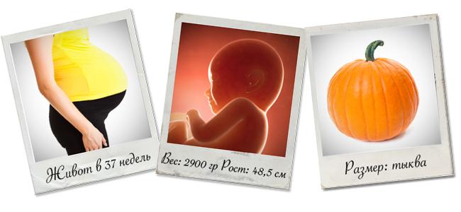 37 неделя беременности, развитие плода