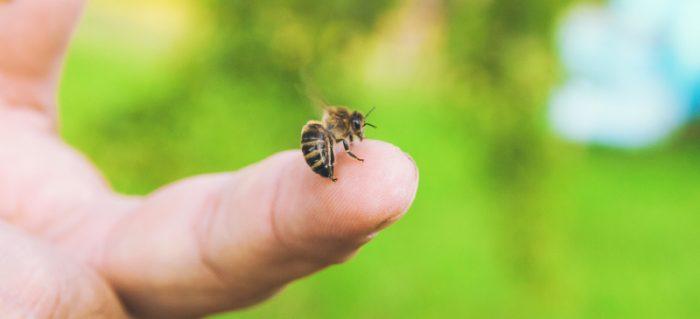 как распознать укус осы