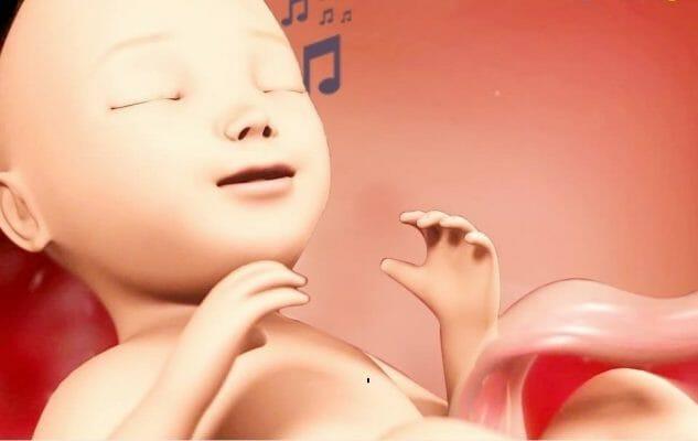 ребенок в животе ощущает вибрацию и звуки